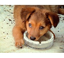 Shy puppy  Photographic Print