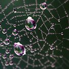 Spider Jewels by Astrid Ewing Photography