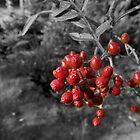 The forbidden fruit by Zozzy-zebra