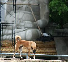 Temple Dog with Buddha by KelseyGallery
