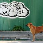 The Graffiti Artist  by KelseyGallery