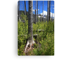 After forest fire Canvas Print