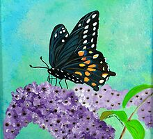 Feeding SwallowTail by Maggie Miller
