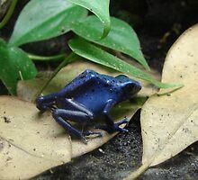 """""""Blue Dart Frog""""  by Carter L. Shepard by echoesofheaven"""