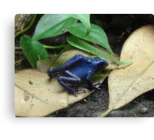"""Blue Dart Frog""  by Carter L. Shepard Canvas Print"