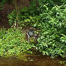 Beatrix Potter Garden (2) Frog by kalaryder