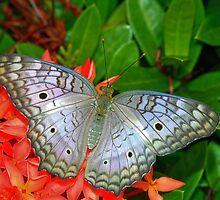 quest for the light a butterfly  by Wieslaw Jan Syposz