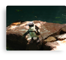 """Black Footed Penguin 3""  by Carter L. Shepard Canvas Print"