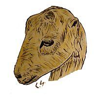 """Lamancha Goat""  by Carter L. Shepard Photographic Print"