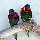 Swainson's Rainbow Lorikeets - - Cards by Maria A. Barnowl