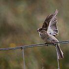 Little Sparrow by Jo Nijenhuis