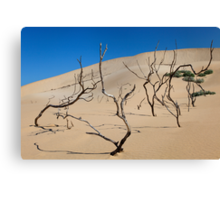 Shifting Dune Canvas Print