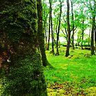 Forest  by JudithBillinger