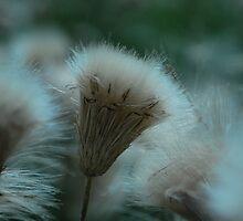 fluff  by Jeff Stroud