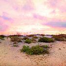 Dunes of Boca Grande by Ticker