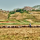Castelluccio Sheepman by Antonio Zarli