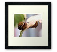Snail hide and seek  Framed Print