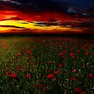 Poppy Sunset by timpr