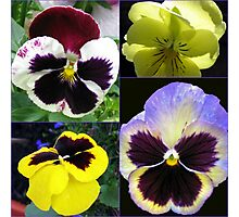 Cute Pansy Faces Collage Photographic Print