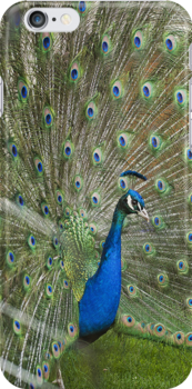 Peacock iPhone Case by Emilie Trammell