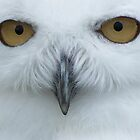 Snowy Owl Portrait by The Walker Touch