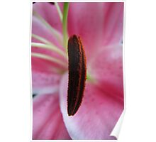 Oriental Lily Anther Poster