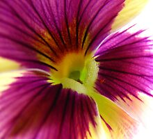Pansy Une by tobeandtohave
