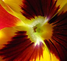 Yellow Pansy Deux by tobeandtohave