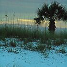 Palm at Dusk by Denise N Young