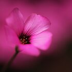 Pink Fluorescence by Donna-R