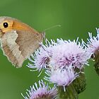 Meadow Brown by Gill Langridge