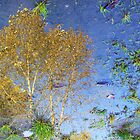 WiL Tree Reflection by Murray211