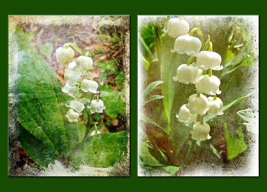 Lily of the Valley - Duet in White by MotherNature