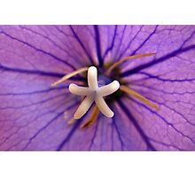 Purple Flower Deux Photographic Print