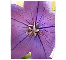 Purple Flower Une Poster