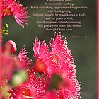 ~ Philippians 4:4-7 ~ by Donna Keevers Driver