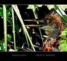 Heron Chick - - Posters & More by Maria A. Barnowl
