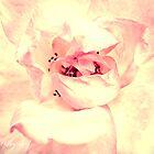Fluffy Pink by Zoe Harris