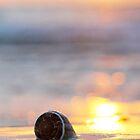 Shell Beauty by Amy Dee