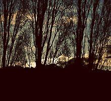 Poplar sky by wallflowerarts