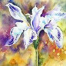 Pond Iris by Ruth S Harris