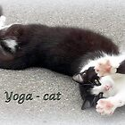 Yoga - Cat by The Creative Minds