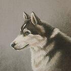 Husky Breed Study by MysticMeadow