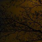 It's stark and dark by Hyaptia42