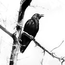 Mother Crow (Views: 832 as of 7-12-13) by Rhonda Strickland