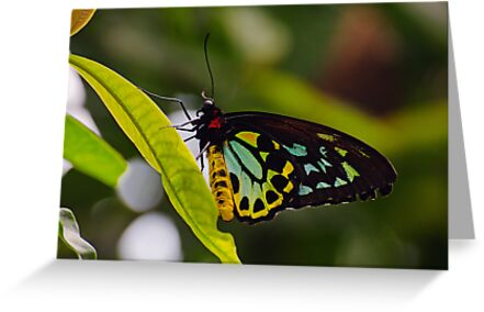 butterfly colors by cherylc1
