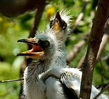 Egret Chicks - - Cards by Maria A. Barnowl