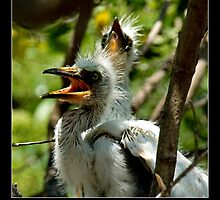Egret Chicks - - Posters & More by Maria A. Barnowl