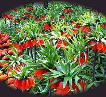 0range Crown Imperials - Keukenhof Gardens by kathrynsgallery