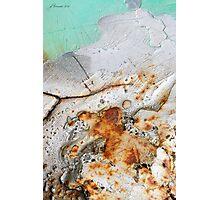 Winter's Demise Photographic Print